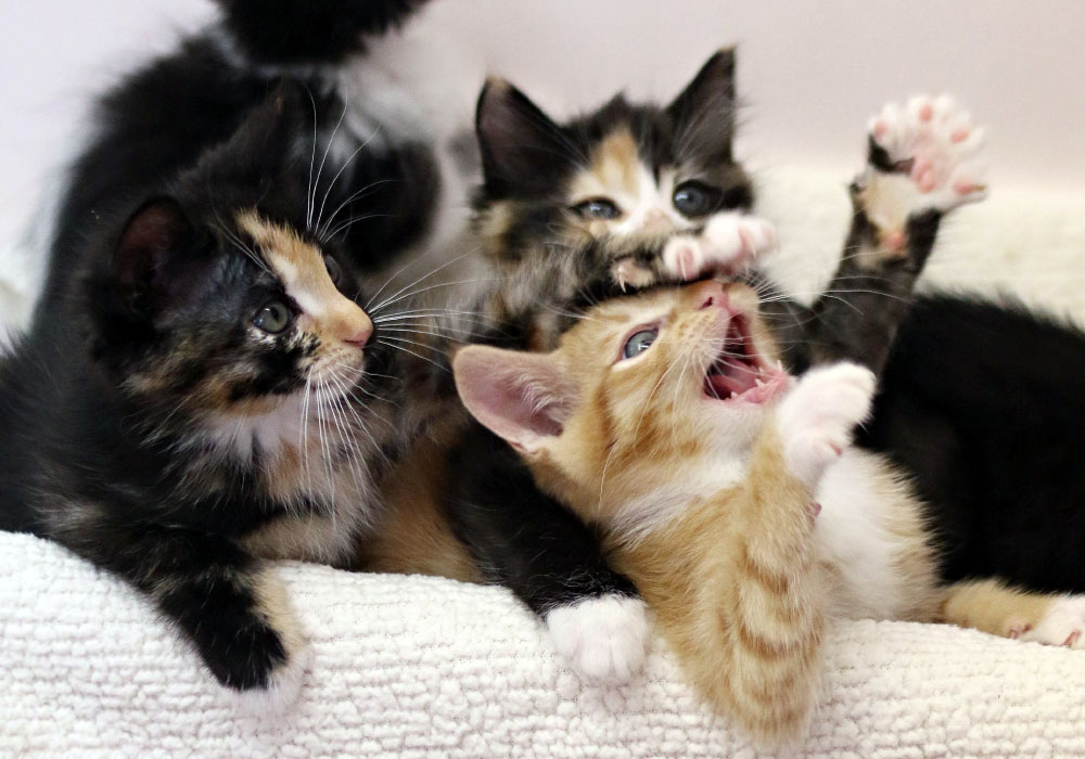 Bundle of Kittens at Kitten Rescue's Kitten Nursery