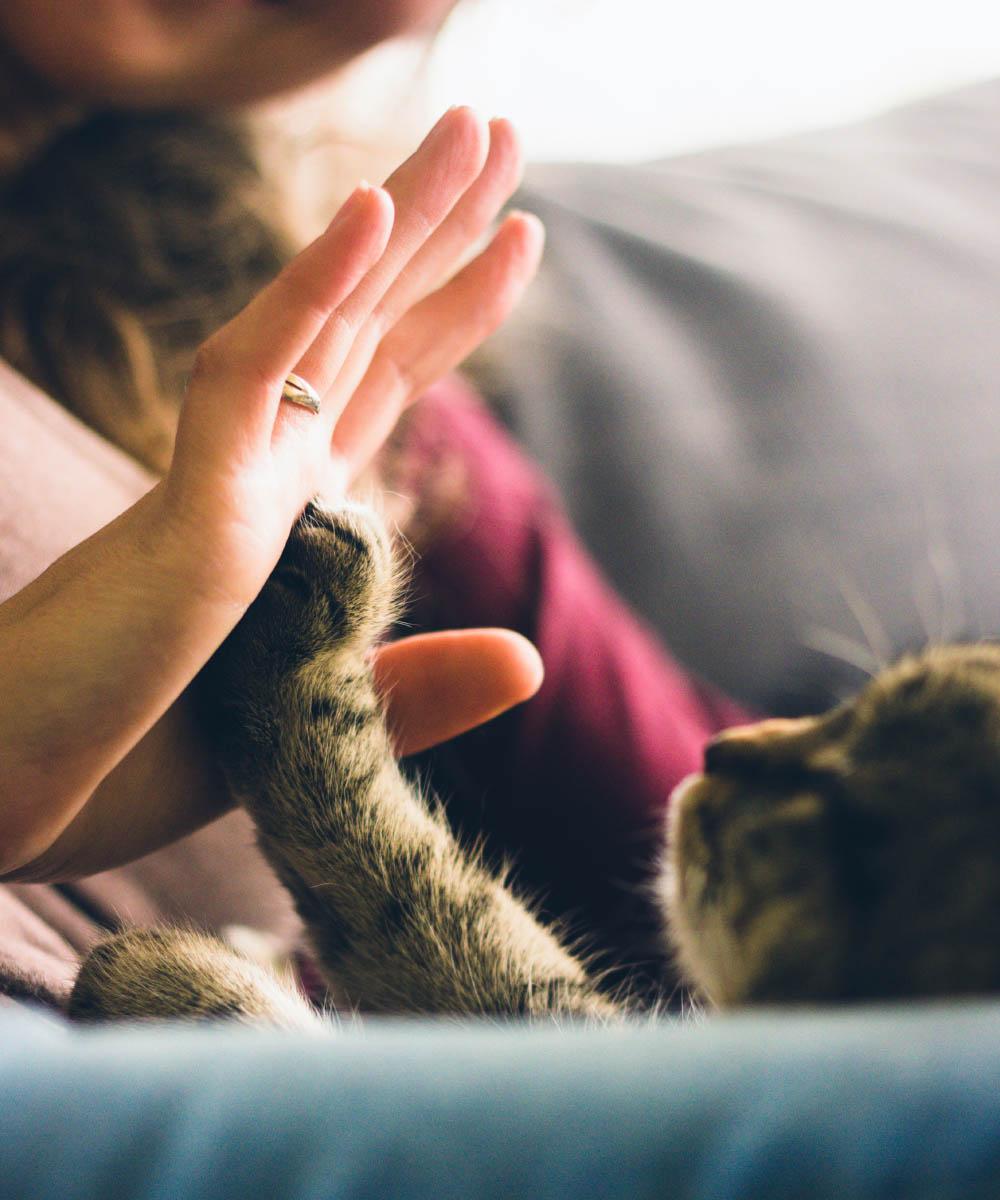 Kitten Rescue's Planned Giving