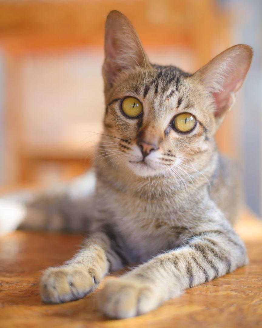 Kitten Rescue's Planned Giving & Lifetime Care Program
