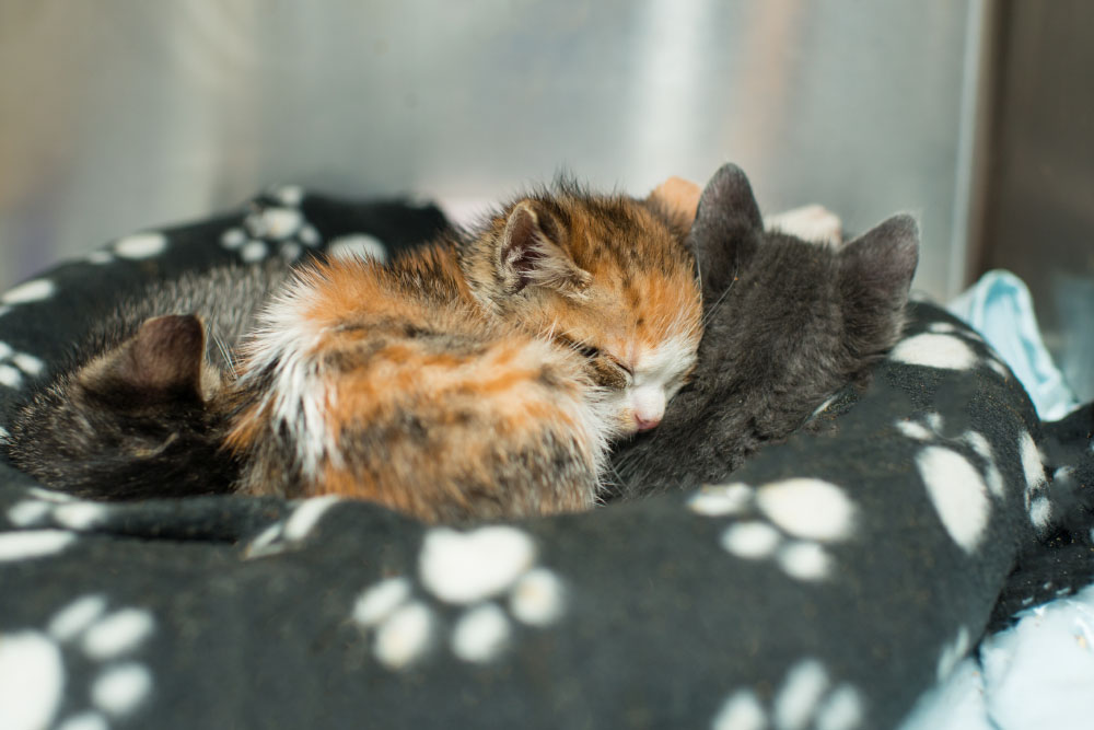 Raising Orphaned Kittens Kitten Rescue - Take look inside one amazing cat sanctuaries world