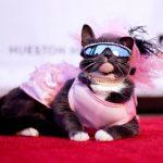 Kitten Rescue's 9th Annual Fur Ball