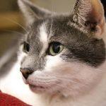 Sponsor a Cat —C-Note