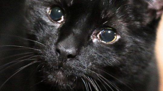Sponsor a Cat —Sasha