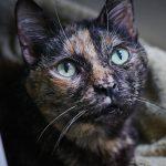 Sponsor a Cat —Simone