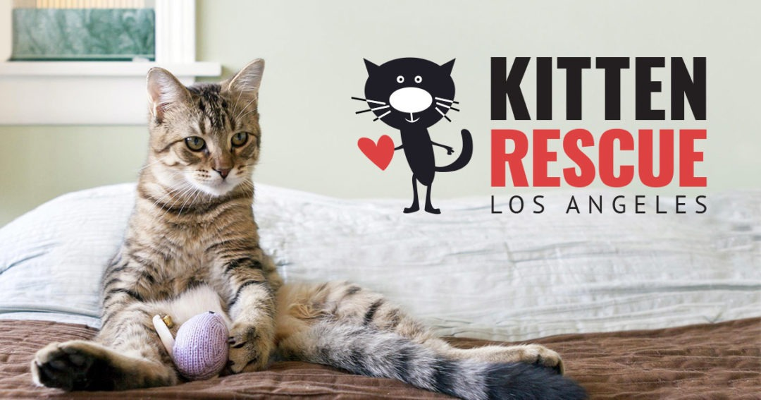 Kitten Rescue • Los Angeles