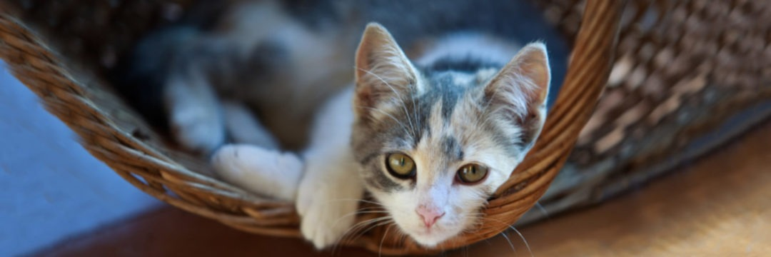 Cat Adoption Form • Kitten Rescue