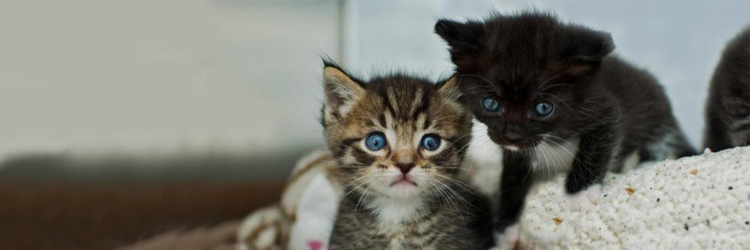 The Kitten Nursery • Kitten Rescue