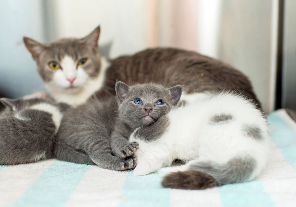Mom Cat and Babies at Kitten Rescue's Kitten Nursery