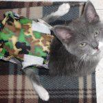 Thumper - a spina bifida cat