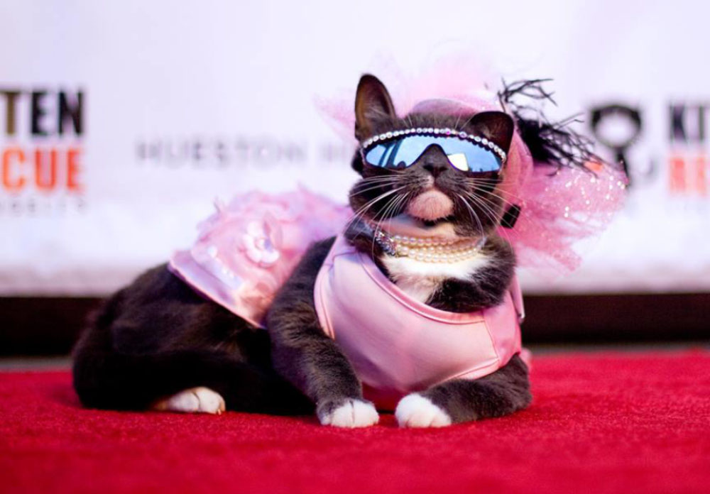 Kitten Rescue's 9th Annual Fur Ball