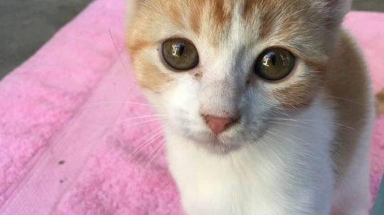 Sponsor a Cat —Holly