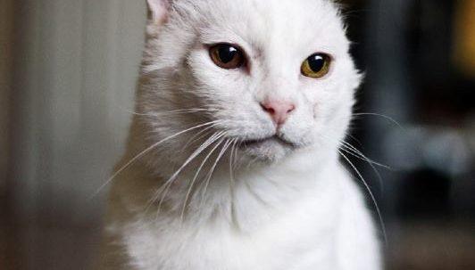 Sponsor a Cat —Mrs. Frumbleberry