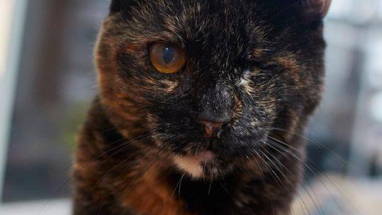 Sponsor a Cat —Pearlie