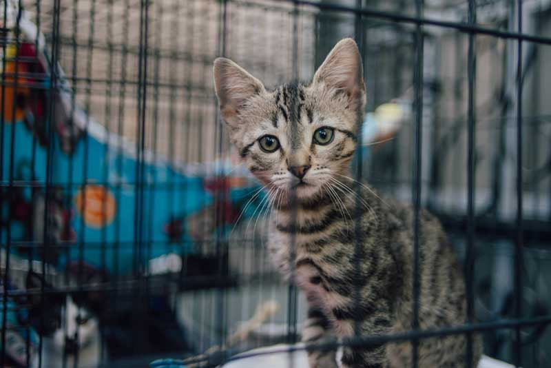 Kitten Rescue's Open House
