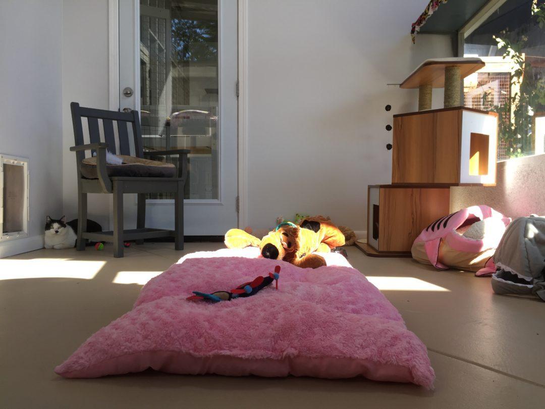 Kitten Rescue's Feline Leukemia Sanctuary Room