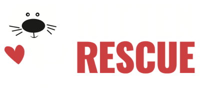 Kitten Care Basics • Kitten Rescue