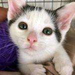 A Kitten at Kitten Rescue's Pet Food Express Adoption Event