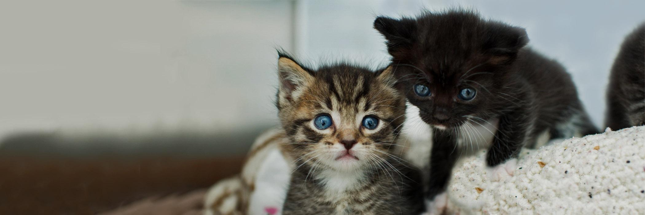The Kitten Nursery