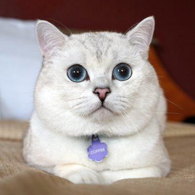Kitten Rescue's Fur Ball Guest - Coffee Cat