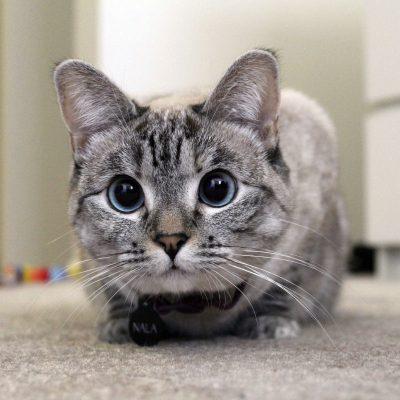 Kitten Rescue's Fur Ball Guest - Nala Cat
