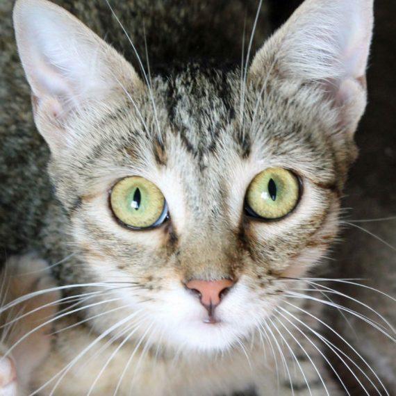 Available Animals • Kitten Rescue