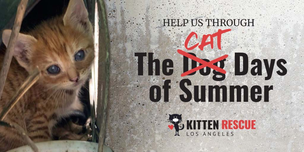Kitten Rescue Cat Days of Summer Campaign