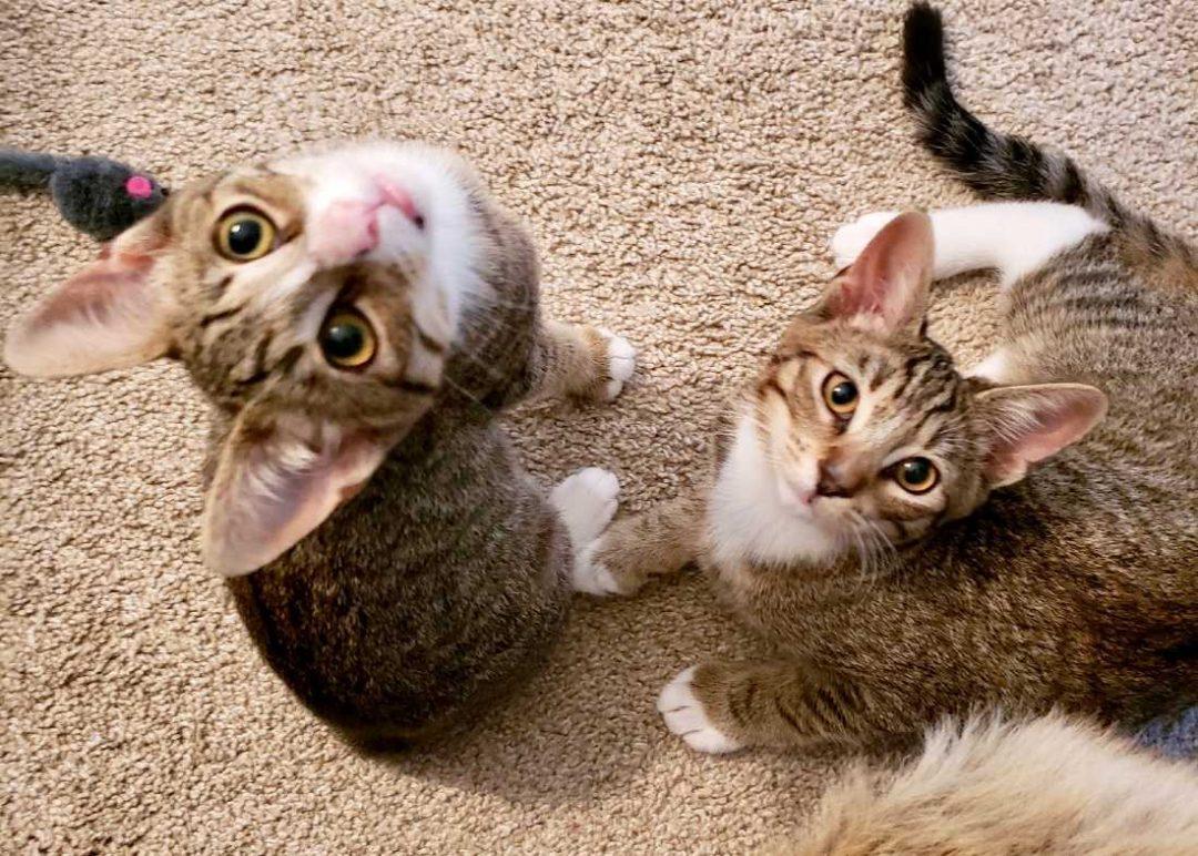 Basil-and-Nutmeg