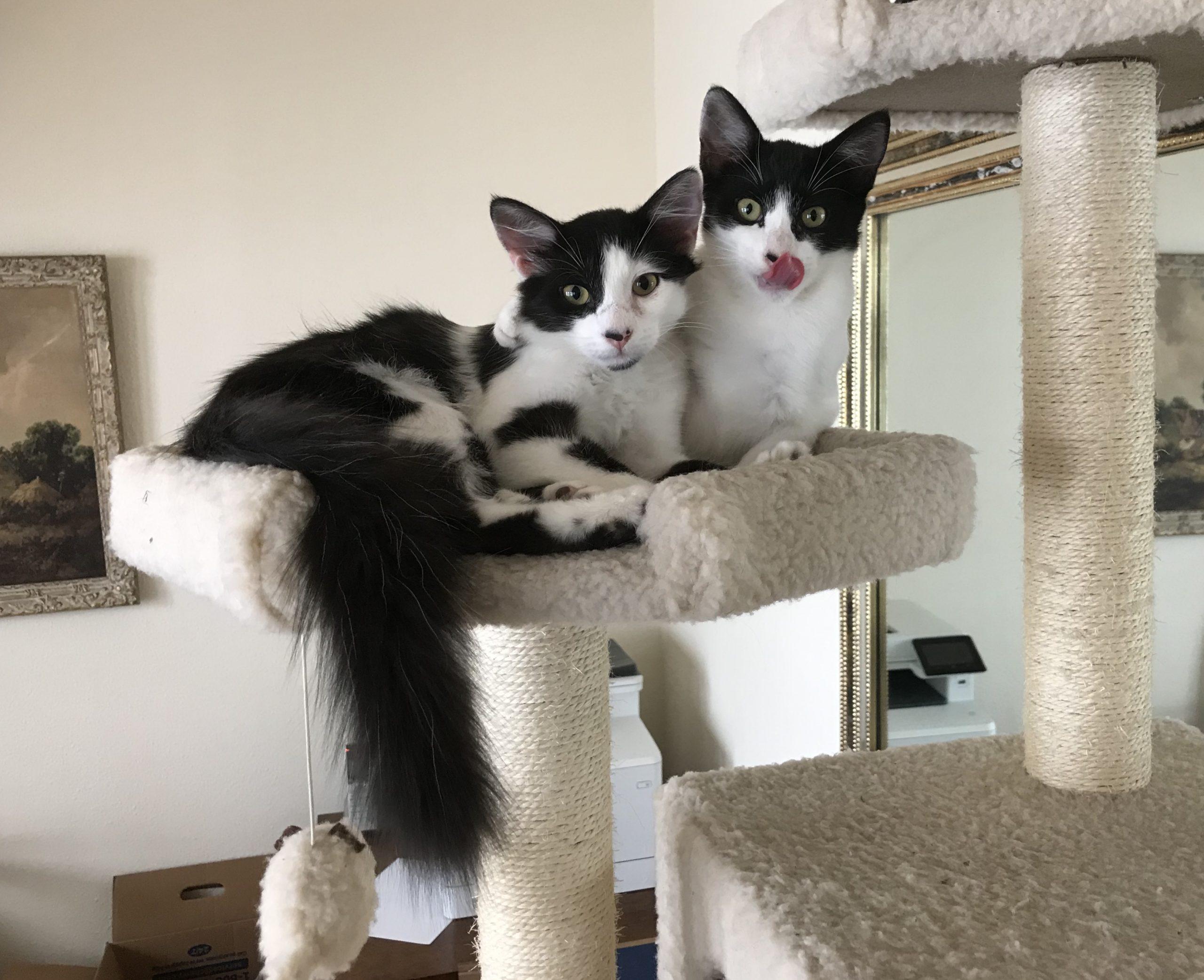 Molly-and-Sali