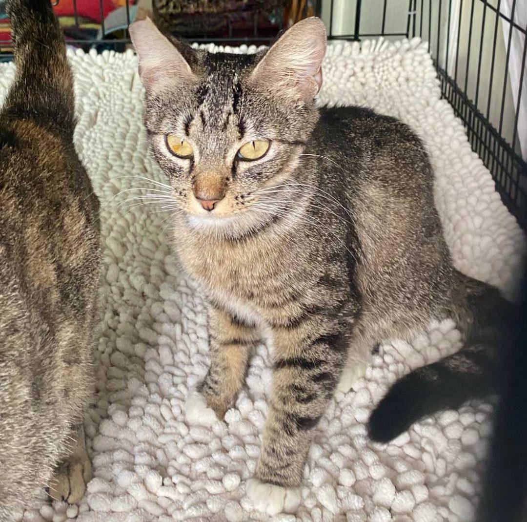 Puma-and-Savannah