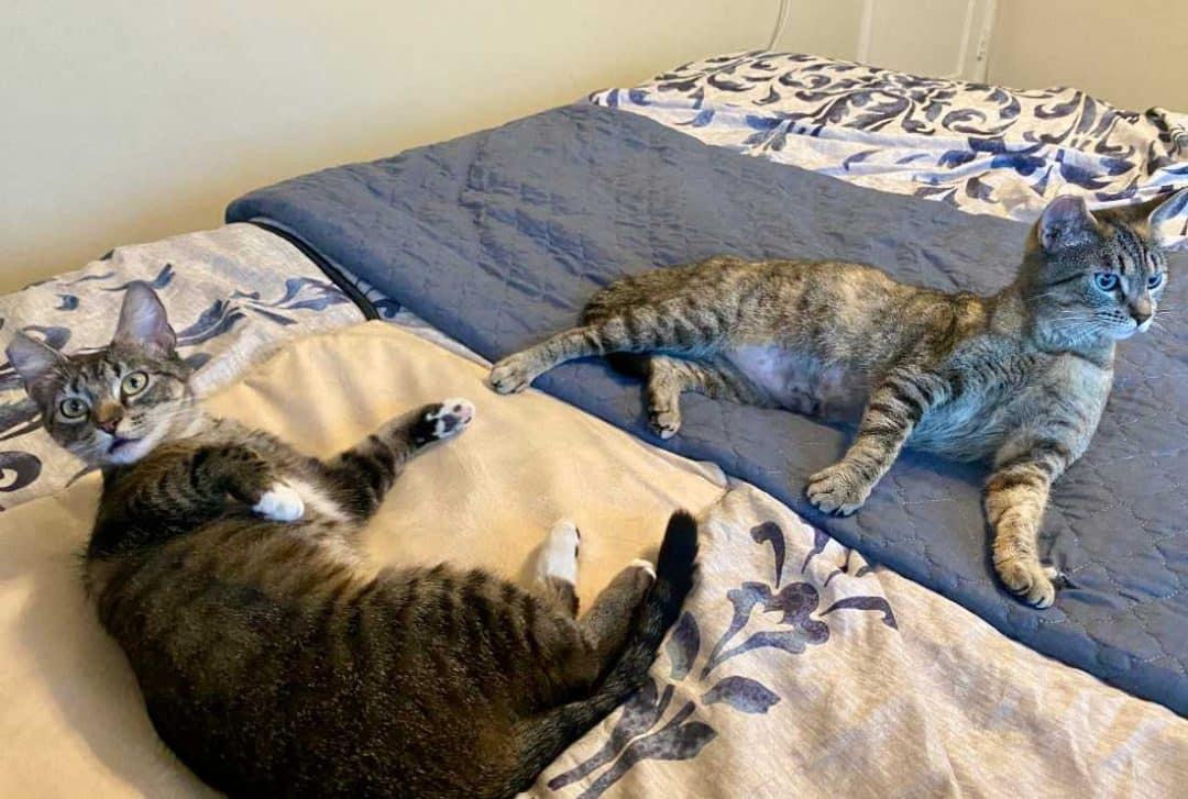 Puma and Savannah