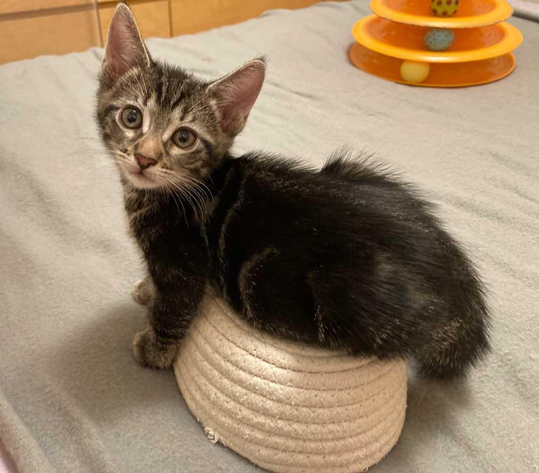 Bonita-and-Cutie-Patootie