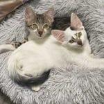 KittenRescue_Momiji-and-Kisa