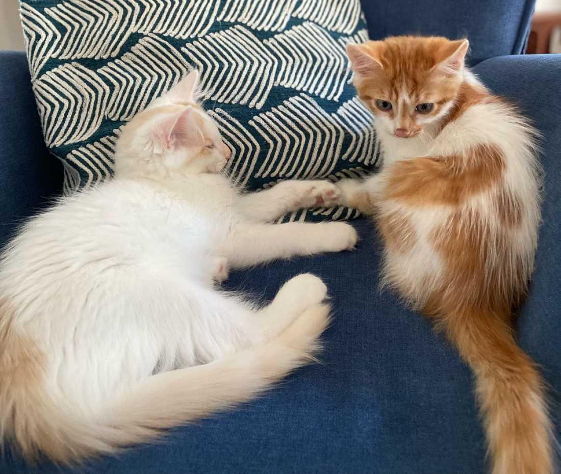 Alphie-and-Dixon